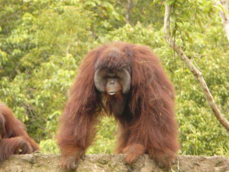 Borneo (3) – het volledige verhaal